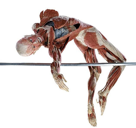 Body Worlds Johannesburg