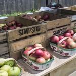 Walkerville Farmers Market