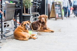 Dog friendly restaurants