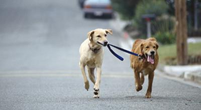 Dog Jog, Walk And Run