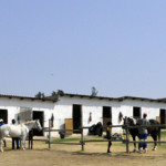 So Much To Do At Shepherd's Fold Stables!