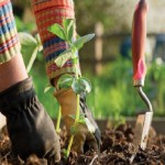 Autumn Gardening: How To Prepare For Spring