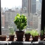The Joburg Guide To Urban Gardening