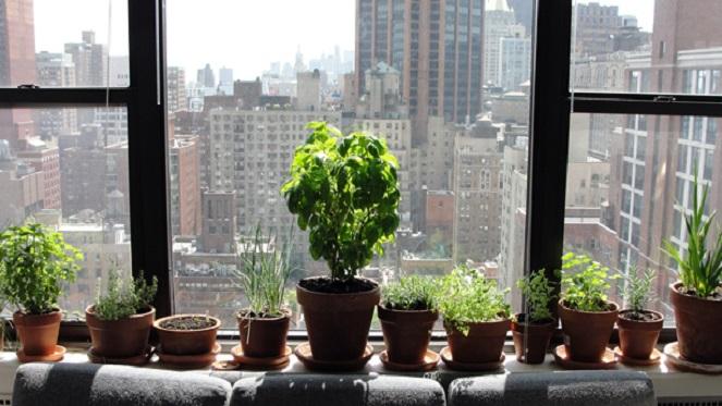 The Joburg Guide To Urban Gardening - Joburg on indoor plants for home, indoor plants-interior, indoor plants for christmas, indoor tulips, indoor gardening, indoor birds, indoor water plants on sale, indoor plants for aquarium,