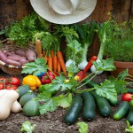 How To Grow Your Own Veggie Garden!