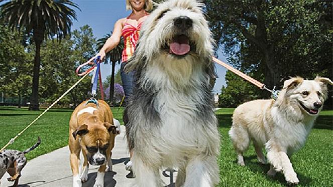 Dogz In The Park