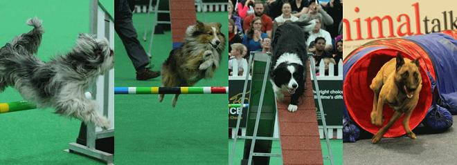 WODAC Pet Expo