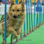The World of Dogs & Cats And Pet Expo 2018