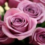 Top Florists In Johannesburg