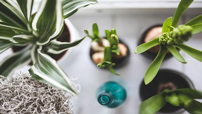 Plant Nurseries In Johannesburg - Joburg.co.za on indoor plants for home, indoor plants-interior, indoor plants for christmas, indoor tulips, indoor gardening, indoor birds, indoor water plants on sale, indoor plants for aquarium,