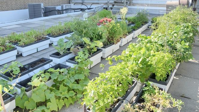 Attirant Rooftop Gardening In The Inner City
