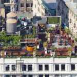 Rooftop Gardening In The Inner City