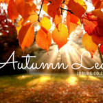 The First Insta-Walk: Autumn Leaves