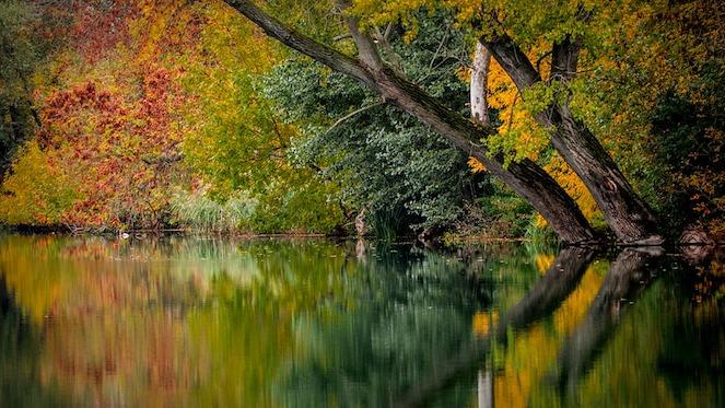 autumn-994897_960_720