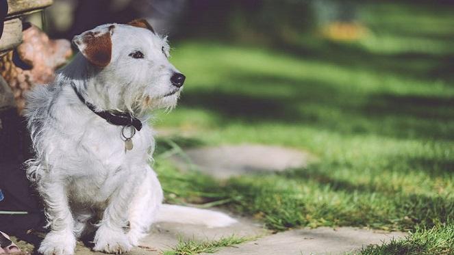 Sandton SPCA MuttWalk