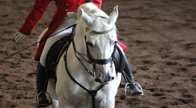 Spring Spectacular At The Lipizzaner Centre