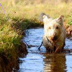 Muddy Puppy Spring Challenge