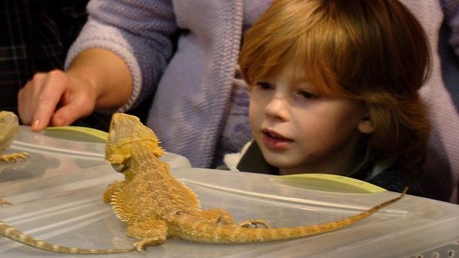 The Reptile Expo